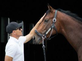 Art Collector has taken trainer Tommy Drury Jr. on the ride of his life this year. He's the 5/2 second choice in Saturday's Preakness Stakes. (Image: Wendy Wooley)