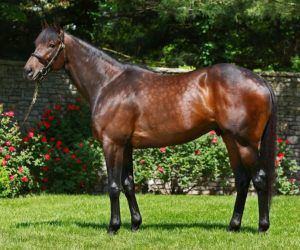 Uncle Mo-Coolmore Fees