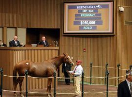 Expo Gold, in foal to multiple Grade 1 winner Catholic Boy, sold for $950,000. She is better known as the dam of Preakness Stakes champion Swiss Skydiver. (Image: Keeneland)