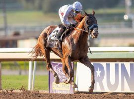 Improbable was  nothing short of awesome in the Grade 1 Awesome Again Stakes. The 5/2 favorite rides into the Breeders' Cup Classic on a three-race win streak. (Image: Eclipse Sportswire)