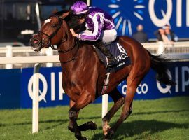 Magical is a worthy 5/2 favorite to put stellar trainer Aidan O'Brien atop the Breeders' Cup Turf mountain. (Image: Simon Cooper/PA Wire)