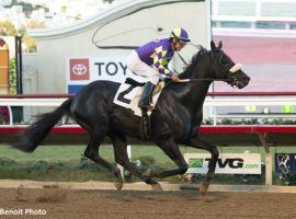 Midcourt's last victory came in February's San Pasqual Stakes. He is odds-on to repeat as Native Diver Stakes champion. (Image: Benoit Photo)