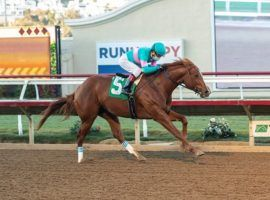 Red Flag and Victor Espinoza flew up the Kentucky Derby Futures Board with their 7 1/4-length breeze in Sunday's Bob Hope Stakes at Del Mar. The Tamarkuz colt is 50/1 to win the 2021 Derby. (Image: Benoit Photo)