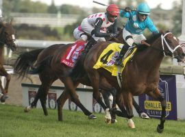 Justin Stein and Starship Jubilee's victory in the Woodbine Mile was one of Woodbine's enduring racing images this year. The Canadian flagship track closed three weeks early due to a provincial government lockdown. (Image: Michael Burns Photo)