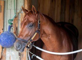 Vekoma sprinted to 3/1 favorite status in the Breeders' Cup Sprint. But the 4-year-old scratched from Saturday's race due to a fever. (Image: Skip Dickstein/Albany Times Union)