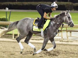 A fatal injury to Kentucky Derby runner Winning Impression prompted Churchill Downs officials to close the track's turf course for the duration of its fall meet. (Image: Coady Photgraphy/Churchill Downs)