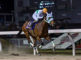 Alain Barows seized the Japan Road to the Kentucky Derby lead with his Zen-Nippon Nisai Yushun victory earlier this month. The undefeated colt debuted on Circa Sports' Derby Futures Board at 55/1. (Image: Tomoya Moriuchi/Horsephotos.com)