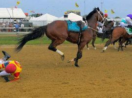 Bodexpress became a YouTube sensation for dumping jockey John Velazquez at the start of the 2019 Preakness Stakes. But the horse matured into a Grade 1 winner before his sudden retirement. (Image: John McDonnell/Washington Post via AP)