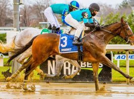 Brooklyn Strong splashed home by a neck in Saturday's Grade 2 Remsen Stakes at Aqueduct. This earned the 2-year-old gelding an odds cut on both Circa Sports and William Hill Nevada's Kentucky Derby Futures Boards. (Image: Eclipse Sportswire)