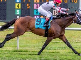 Factor This won the Muniz Memorial Classic at Fair Grounds in record time. He's looking for his fourth Grade 2 win in as many tracks at Saturday's Grade 2 Fort Lauderdale Stakes. (Image: Lou Hodges/Hodges Photography)