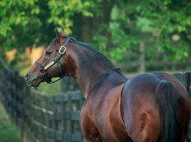 Not even his most devoted supporters saw Into Mischief enter the 2020s as North America's top stallion. The sire of Kentucky Derby winner Authentic captured that honor for the second consecutive year in a runaway. (Image: Coyle Photography/Spendthrift Farm)