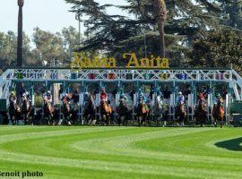 Santa Anita Park' debuted its new turf chute Saturday. Highly Distorted won the 6 1/2-furlong race at 11/1. (Image: Benoit Photography)