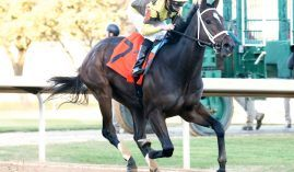 Caddo River used his 10 1/4-length victory in the Smarty Jones to run up the Kentucky Derby futures boards. (Image: Oaklawn Park)