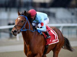 Capo Kane and his 7/1 odds went gate-to-wire en route to the Jerome Stakes title. It put Capo Kane on the Kentucky Derby Trail. (Image: Chelsea Durand/NYRA)