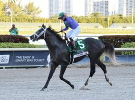 Colonel Liam's victory in the $1 million Pegasus World Cup Turf certainly earned a thumbs-up from jockey Irad Ortiz Jr. Could he be the older American turf star that division needs? (Image: Lauren King/Coglianese Photos)