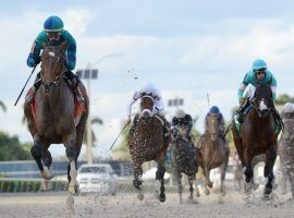 Greatest Honour (left) captured Saturday's Holy Bull at Gulfstream Park by 5 3/4 lengths. His Kentucky Derby futures odds plummeted as a result. (Image: Coglianese Photos)
