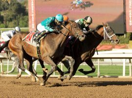 Just a Command (inside) keyed a record trifecta payout at Santa Anita Park Saturday afternoon. He won the maiden claiming race carrying 99/1 odds. (Image: Benoit Photo)