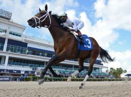 Prime Factor returns to action after dismantling a maiden field by nearly nine lengths in December. He hits the Kentucky Derby Trail in Saturday's Holy Bull at Gulfstream Park. (Image: Ryan Thompson/Coglianese Photos)