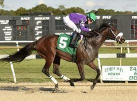 Last time out, Shivaree set the Tampa Bay Downs stakes record en route to winning the Marion County Florida Sire Stakes. The runner-up in last year's Florida Derby returns to action Saturday in the Fred Hooper Stakes at Gulfstream Park. (Image: SV Photography)