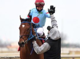Jockey Dylan Davis had plenty of high-fives to deliver after delivering a 6 3/4-length victory aboard Capo Kane in the Jerome. Davis and Capo Kane are the 3/1 second-favorite in Saturday's Withers Stakes at Aqueduct. (Image: Janet Garaguso/NYRA)