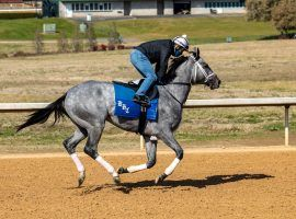 Undefeated Essential Quality makes his 3-year-old debut in Saturday's Southwest Stakes at Oaklawn Park. He's the 3/2 favorite in the Grade 3 Kentucky Derby prep.  (Image: Oaklawn Park)