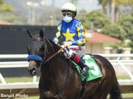 "Freedom Fighter comes to the Grade 2 San Vicente off a five-month layoff. ""The Other Baffert"" in the field is a 5/2 second favorite in what is a small, but strong field. (Image: Benoit Photo)"
