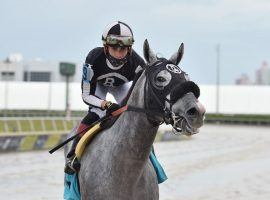 Irad Ortiz rode R Mercedes Boy to victory in Gulfstream Park's ninth race. That was his sixth victory Saturday. (Image: Gulfstream Park Photo)