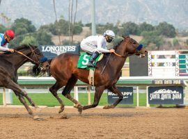 """Life Is Good, who won January's Sham Stakes with the fastest Beyer Speed Figure of any 3-year-old, clocked a bullet 59.6-second workout last Saturday. Both trainer Bob Baffert and racing writer and historian Jon White called his talent """"freaky."""" (Image: Benoit Photo)"""