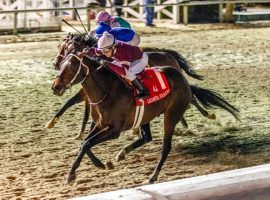 Midnight Bourbon leads the top four finishers of last month's Lecomte Stakes into this weekend's Risen Star Stakes at Fair Grounds. That race gives 50 points to the winner, virtually guaranteeing a Kentucky Derby spot. (Image: Hodges Photography)