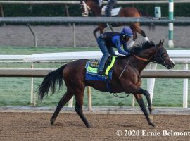 Tarantino, seen here in an October workout, finished a solid second in the Grade 3 Holy Bull. That earned him a prominent odds cut on this week's Kentucky Derby futures boards. (Image: Ernie Belmonte)