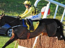 Al Boum Photo and rider Paul Townend seek their third consecutive Gold Cup in Friday's Cheltenham Festival's Gold Cup. (Image: Healy Racing)