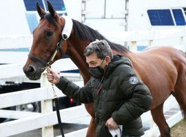 Concert Tour arrived at Oaklawn Park Tuesday for Saturday's Grade 2 Rebel Stakes. He and Bob Baffert stablemate, Hozier, shipped in from Southern California. (Image: Coady Photography/Oaklawn Park)