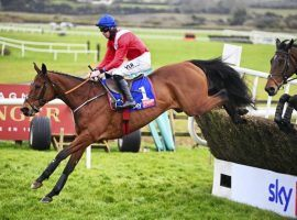 One British bettor is making a leap of faith on unbeaten jumper Envoi Allen. He stands to win more than £511,000 pounds if the 4/9 favorite wins the Marsh Novices' Chase at Cheltenham Thursday. (Image: Healy Racing)