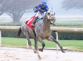 Yes, Essential Quality is No. 1 in the Kentucky Derby Future Pool 4. The Tapit colt opens at 7/2 when the KDFW's Pool 4 begins Friday. (Image: Coady Photography)