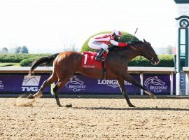 Highly Motivated set the 6 1/2-furlong Keeneland track record with this victory in the Nyquist Stakes. He opens his 3-year-old season Saturday in the Gotham Stakes at Aqueduct. (Image: Coady Photography)