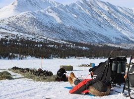 2018 Iditarod champion Peter Kaiser and his dogs rest along the trail in the 2021 Iditarod. (Image: Zachariah Hughes/ADN)