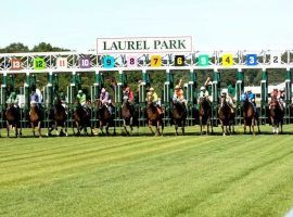 Laurel Park scratched its entire Friday card after an outbreak of equine herpesvirus (EHV) affected four of its barns. (Image: Maryland Racing)