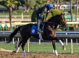 "Maxfield makes his first trip west of the Mississippi for Saturday's Grade 1 Santa Anita Handicap. He's the 8/5 morning-line favorite in the 1 1/4-mile ""Big 'Cap."" (Image: Ernie Belmonte)"