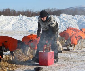 Dallas Seavey 2021 Iditarod dogs sled dog race