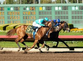 Spielberg, seen here nipping The Great One to win the Los Alamitos Futurity, makes his ninth start at his fifth track in Saturday's Florida Derby. This marks trainer Bob Baffert's first Florida Derby starter in his Hall of Fame career. (Image: Benoit Photo)