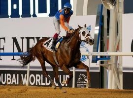 Zenden's fatal injury moments after winning in Dubai last weekend came shortly after The Jockey Club announced Thoroughbred fatalities were at the lowest point since record-keeping began.  (Image: DRC)
