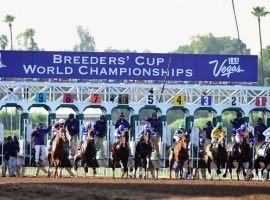 This year's Breeders' Cup World Championships return to Del Mar for the first time since 2017. There are 84 Challenge Series events offering berths in the 14 races. (Image: Getty)
