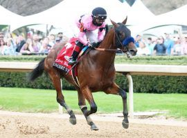 Concert Tour won the Rebel Stakes in March. But his third-place in the Arkansas Derby a month later, led to his connections pulling the one-time Kentucky Derby darling out of the May 1 Derby. (Image: Coady Photography)