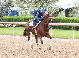 Swiss Skydiver is the 2/1 second favorite in Saturday's Grade 1 Apple Blossom Handicap at Oaklawn Park. (Image: Coady Photography)