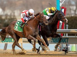 Weyburn (inside) held off a surging Crowded Trade to win the Grade 3 Gotham in February. The two tangle again in the Grade 2 Wood Memorial Saturday at Aqueduct. (Image: Sarah Andrew)