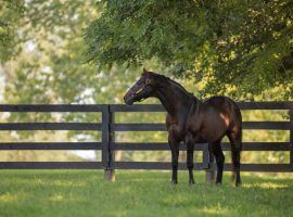 Malibu Moon was the grandson of one Kentucky Derby winner and the sire of another. He died of an apparent heart attack Tuesday afternoon. (Image: Spendthrift Farm)