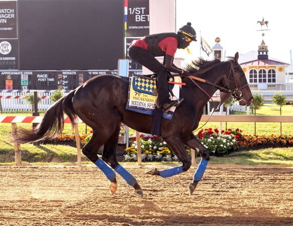 It's been a wild week for Kentucky Derby winner and Preakness Stakes morning-line favorite Medina Spirit. But the colt has no idea what controversy is. (Image: Maryland Jockey Club)