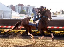 Midnight Bourbon brings one of the most consistent records and running styles into Saturday's Preakness Stakes. His owner, Ron Winchell, seeks his farm's first American Classic title. (Image: Maryland Jockey Club)