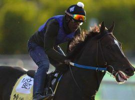 Midnight Bourbon could be one of only two horses to run all three 2021 Triple Crown races.(Image: AP Photo)