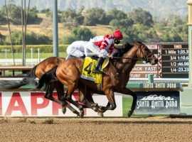 Royal Ship brings the best last-out Beyer Speed Figure, a 108, from this Grade 2 Californian victory. He is the 5/2 co-second favorite in Monday's Grade 1 Hollywood Gold Cup at Santa Anita Park. (Image: Benoit Photo)